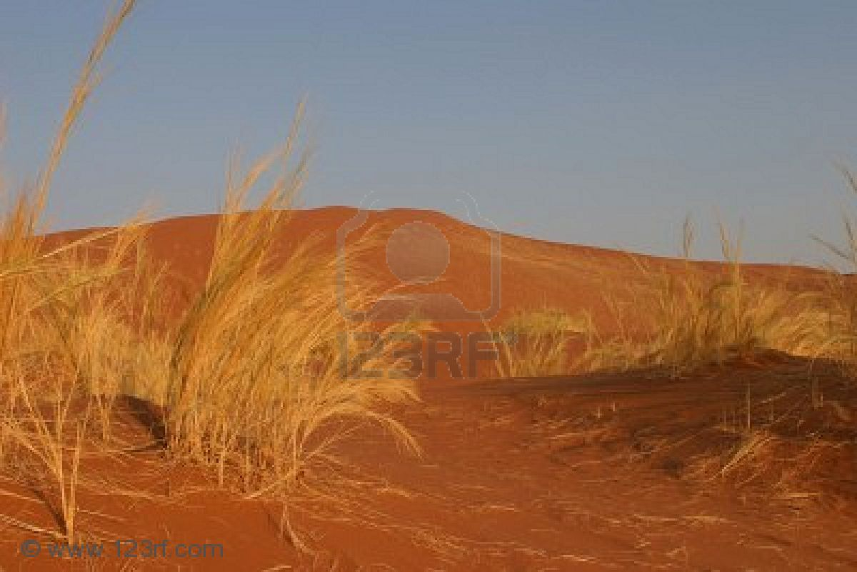 2785268-deep-red-sand-dune-in-the-great-namib-desert-with-dry-grass-as-the-only-vegetation