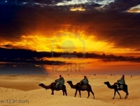 7913122-camel-caravan-going-through-desert-at-sunset